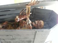 MF140909 - Toe Pincher Casket with Skeleton